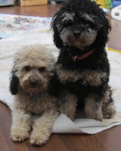 Annie & Hope