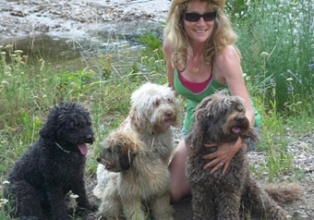 Brig with Alpine Labradoodle pups