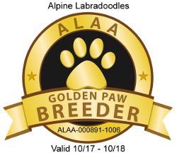 Gold Paw Breeder of Alpine Labradoodles
